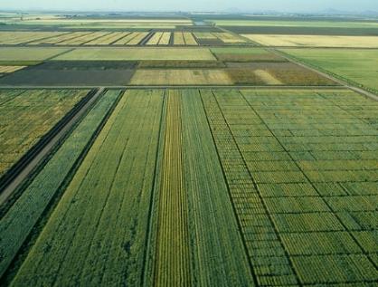 Agricultura de Precisión en México, reto de economía e instrucción