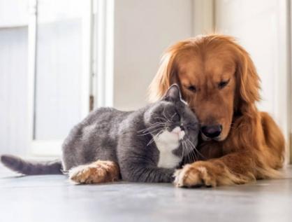 Pide Morena permitir al Congreso legislar sobre protección y bienestar animal