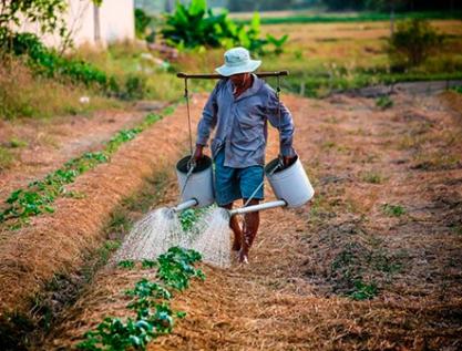 Requieren pronta transformación sistemas de producción agrícola en México