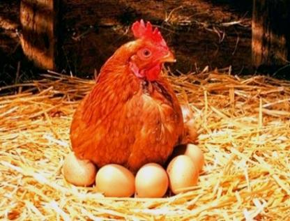 Huevo y pollo aumentaron la inflación en el Indice Nacional de Precios al Consumidor