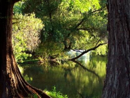 Senado recibe minuta de nueva Ley General de Desarrollo Forestal Sustentable