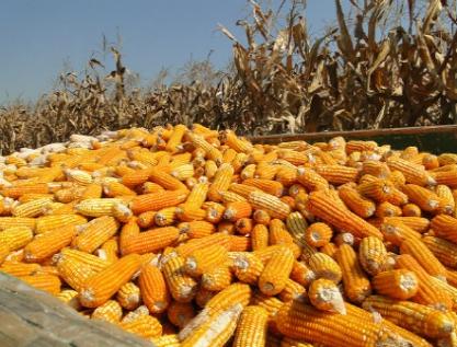En México, la seguridad alimentaria no está garantizada a largo plazo