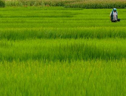 Visibilizar trabajo agrícola no remunerado de mujeres campesinas