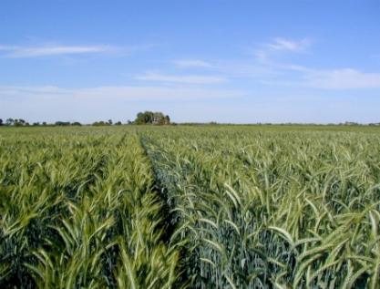 Se prevé mantener 35 programas agropecuarios para 2019