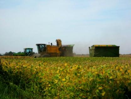 Crean sistema para alargar la vida de granos y semillas almacenados