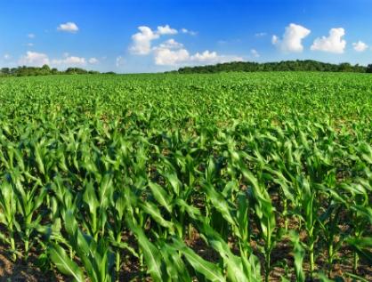 Inútil, Programa Especial Concurrente para el Desarrollo Rural Sustentable