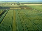 Exige enfoque multidisciplinario producción de bioplaguicidas