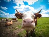 Sequías obligan apoyos adicionales para el agro: CNOG