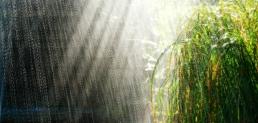 Administración pública federal, obligada a captar agua de lluvia