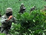 En EU y México se incauta 70% de la marihuana traficada en el mundo
