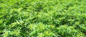 Comisión México-EU debe analizar legalización de marihuana: PRD