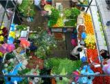 Crean Observatorio de Alimentación México