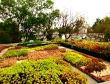 Azoteas y muros verdes, útiles para combatir islas de calor