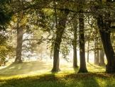 Piden organizaciones fortalecer al sector forestal del país con nueva ley en la materia