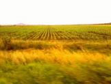 Violenta modelo agroindustrial derechos humanos básicos: UIA