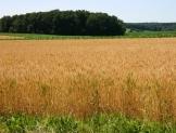 Suficiente producción de alimentos pero difícil distribución y acceso para demanda global