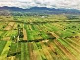 En 2018, precios agropecuarios, a la baja; costos al alza