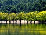 Urge política forestal para detener la destrucción de los bosques templados del país