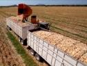 La producción de alimentos, el mayor desafío para la sustentabilidad global
