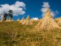 Elaboran Programa Nacional de Transición Agroecológica y Patrimonio Biocultural