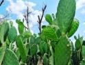 Advierten sobre amenazas al campo mexicano