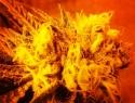 Aprobación de cannabis, sólo una reforma al prohibicionismo