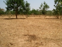 Amenazan la seguridad alimentaria desertificación y degradación de tierras