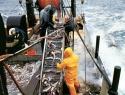 Actividad acuícola del país, menor a la del resto del mundo: CEDRSSA