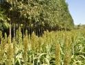 Recibe sector rural 1.5 por ciento de financiamiento total de economía