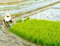 Presentan proyecto de herramientas para el financiamiento rural sustentable