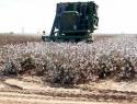 Sólo 11 por ciento del territorio nacional es apto para cultivar alimentos