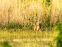 Ante amenaza de extinción masiva de especies, sugieren refaunación