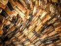 Al menos 70 por ciento de la madera que se consume en méxico es ilegal