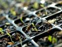 Deberá Sagarpa apoyar a comercializadoras mexicanas de semillas