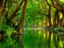 Expide Senado Ley General de Desarrollo Forestal Sustentable