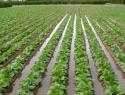 Utilizar aguas residuales para riego incide sobre enfermedades crónico degenerativas